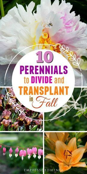 Garden Therapy Different Garden Ideas: 10 Flowering Perennials To Transplant In Fall