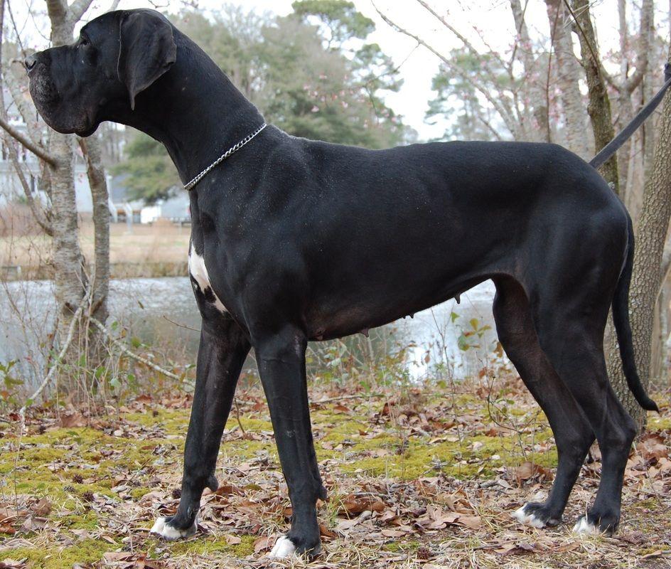 Sweet Rottweiler Puppy - http://bestdogbreeds.net/sweet-rottweiler-puppy/ -  please visit http://bestdogbreeds.net/sweet-rottweiler-puppy/, for more pictures of Sweet Rottweiler Puppy