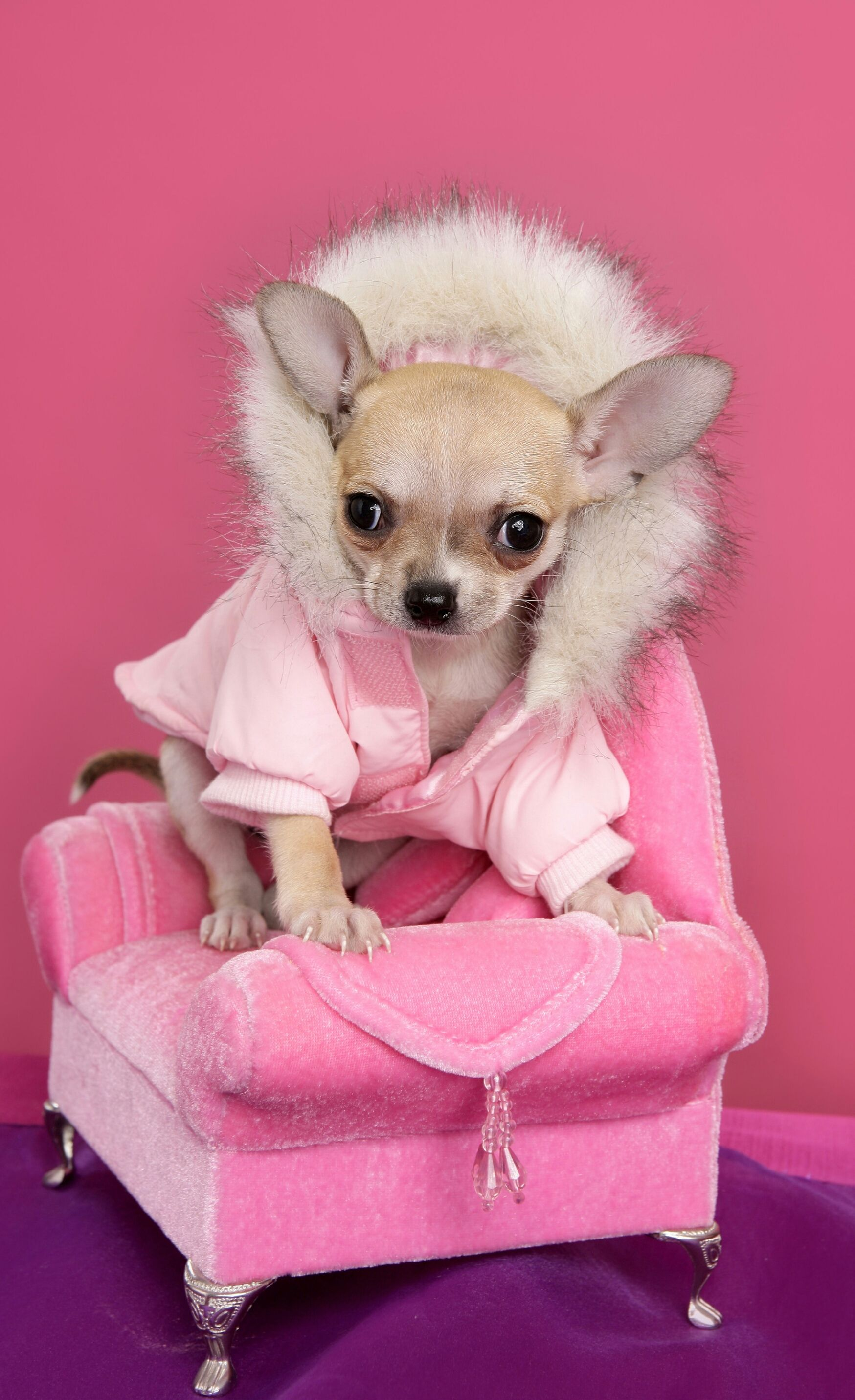 Pin de Whima Qr en Mascotas preferidas Disfraces para
