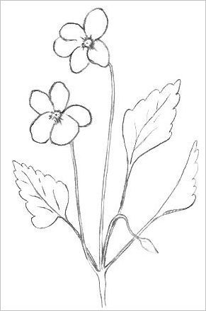Draw flowers draw easy flowers draw flowers for Simple flowers for drawing