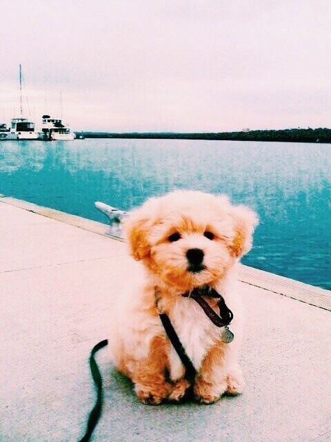 Cute Animals By Aileen Walter On Dogs Cute Dogs Cute Puppies