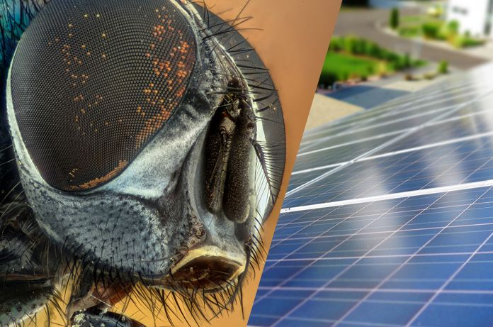 Fly S Compound Eyes Breakthrough In Solar Technology Nature Leads Again Biomimicry Newrules Solar Biomimicry Examples Solar Technology