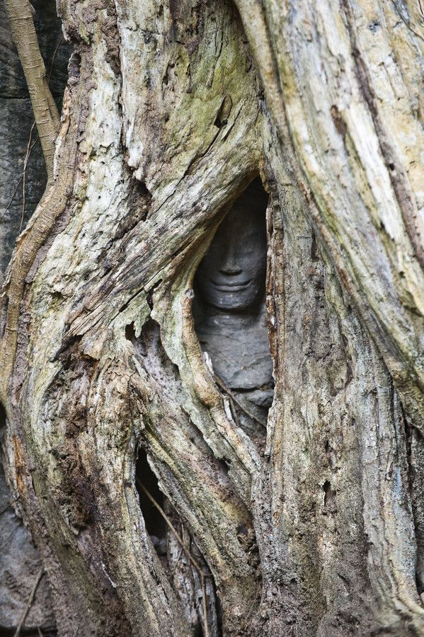 This tree is slowly engulfing a stone statue. Angkor Wat, Cambodia. TAKE THAT, WEEPING ANGEL!