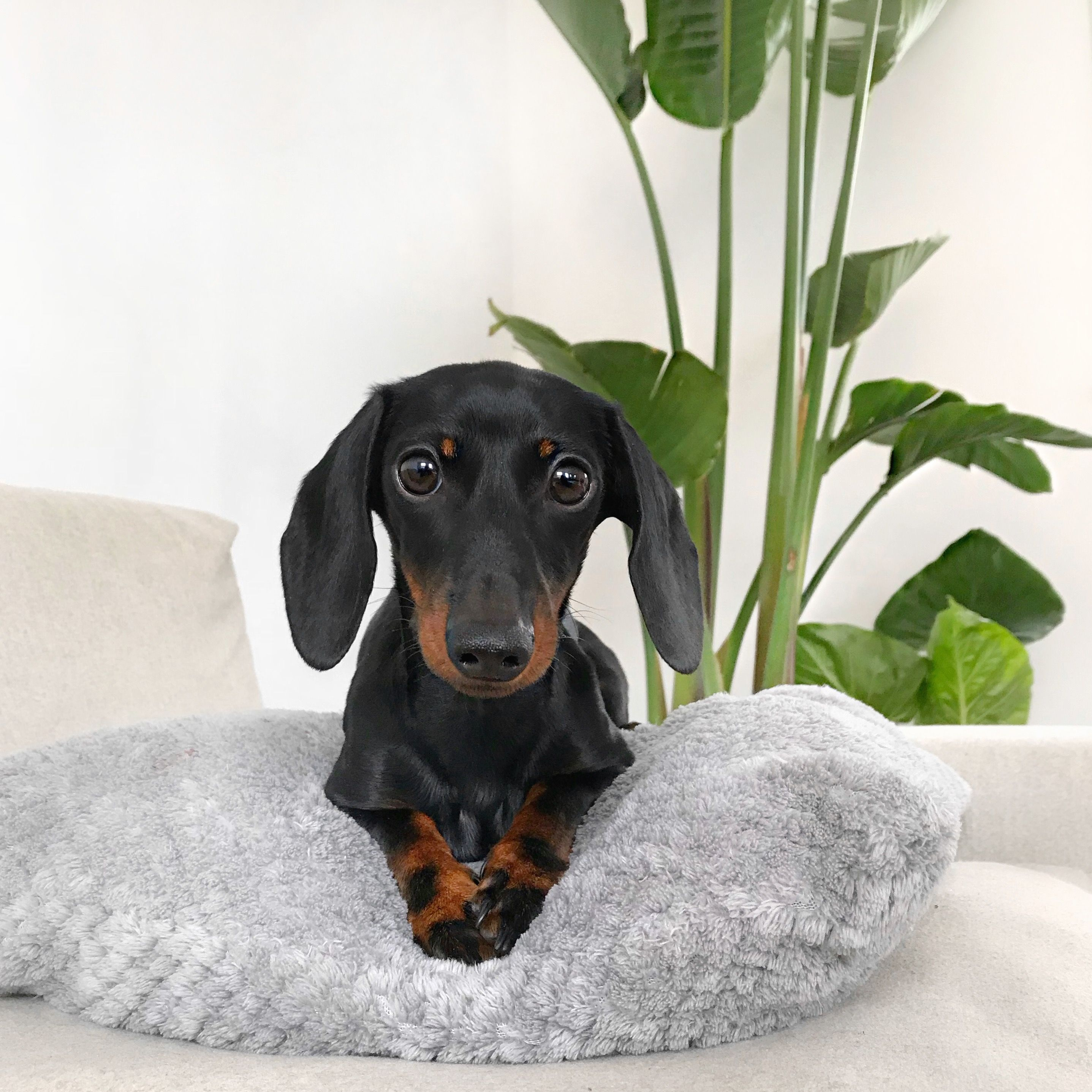 That Is My Dog Milo With Images Weenie Dogs Daushund Puppies