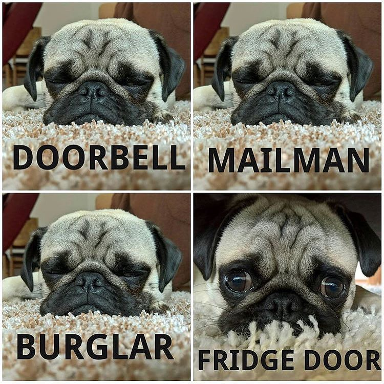 Every Single Time Photo By Mr Picco Thepug Want To Be Featured