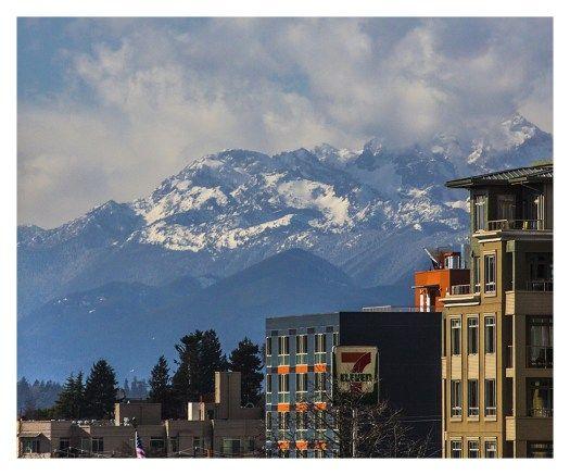 Koi Apartments Seattle Wa 98107 Apartments For Rent Seattle Apartment Seattle Apartments For Rent