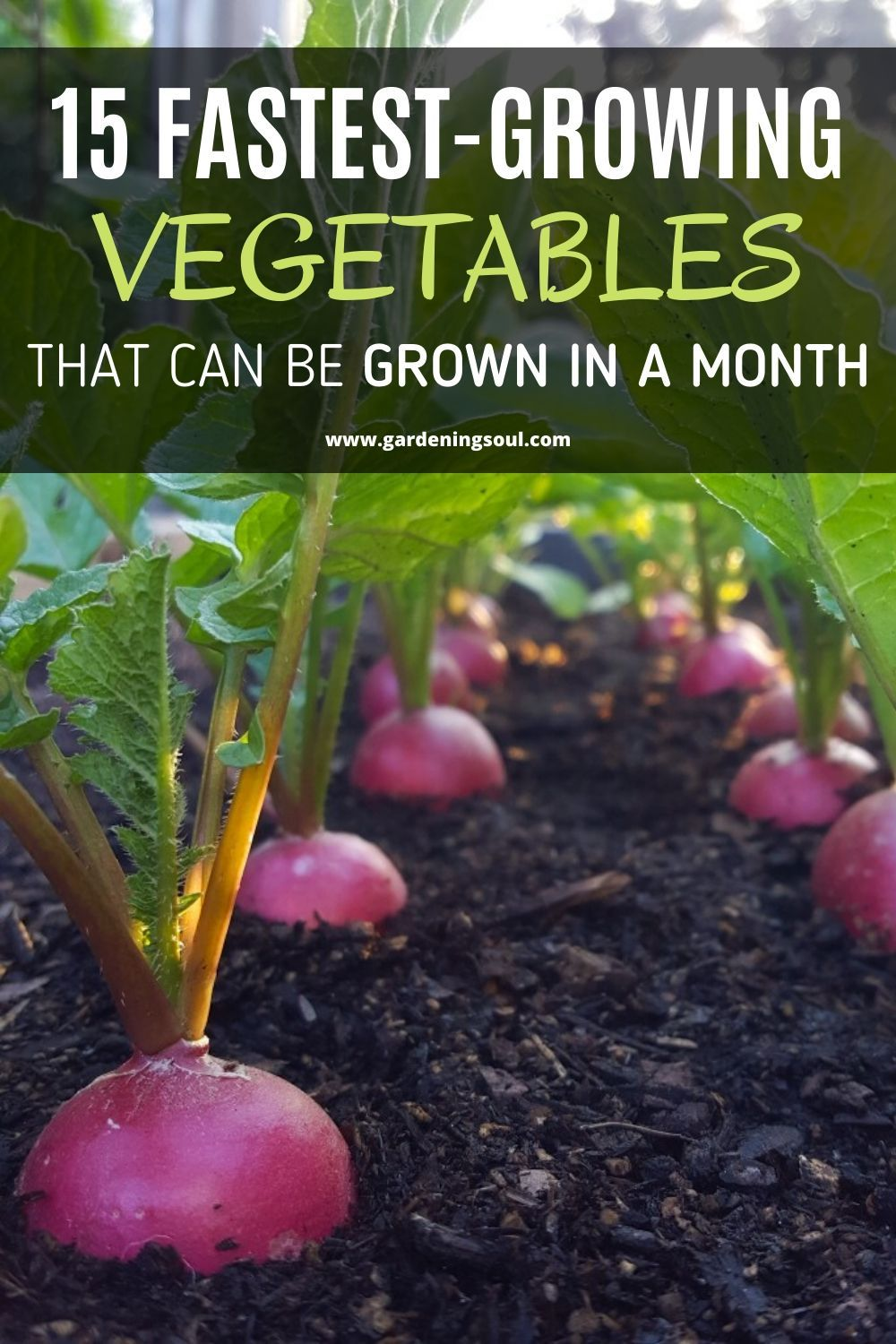 15 Fastest Growing Vegetables That Can Be Grown In A Month In 2020 Fast Growing Vegetables Fast Growing Plants Growing Vegetables