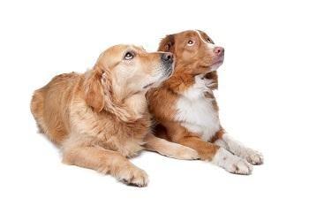 Dogs Overweight? - Shocking Study - http://www.dogmessenger.com/dog-overweight/