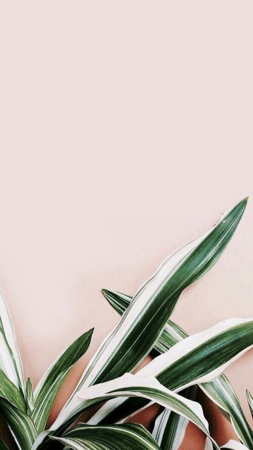 #flower #plants #green #backround #aesthetic #wallpaper ...