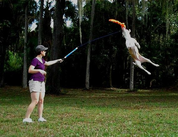 Flirt Pole Dog Exercise Toy For Pit Bulls Or By Squishyfacestudio