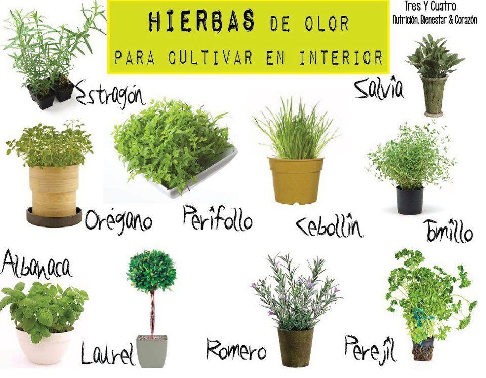 Hierbas con olor para cultivar en el interior cuidados for Tipos de arboles para plantar en casa