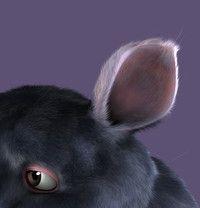 blender.org - Hair and Fur