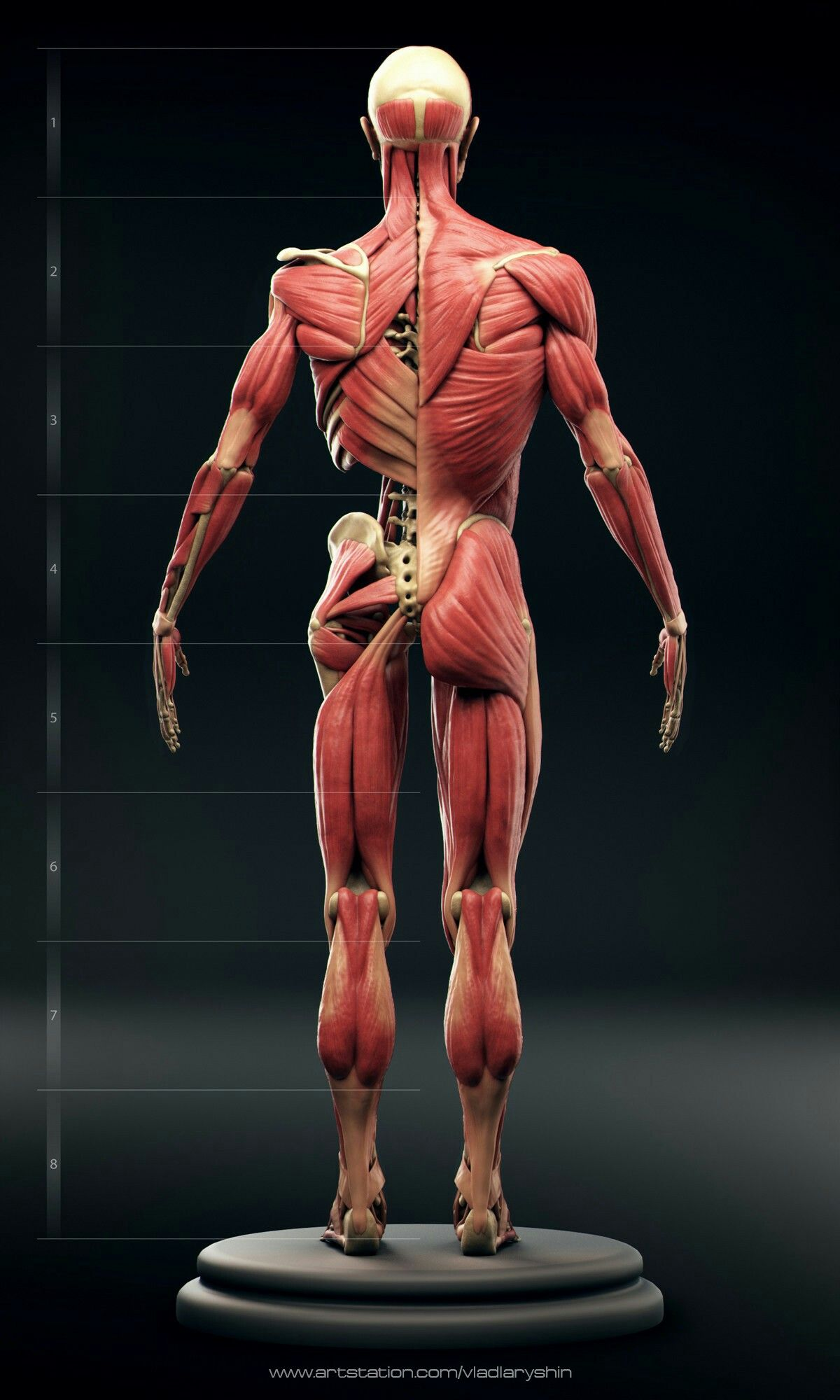 Pin de gabriela palanca en cuerpo humano | Pinterest | Anatomía ...