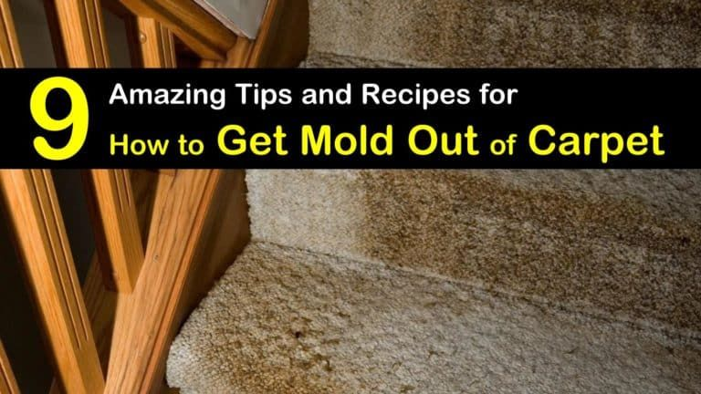 How To Get Rid Of Mold Out Of Carpet