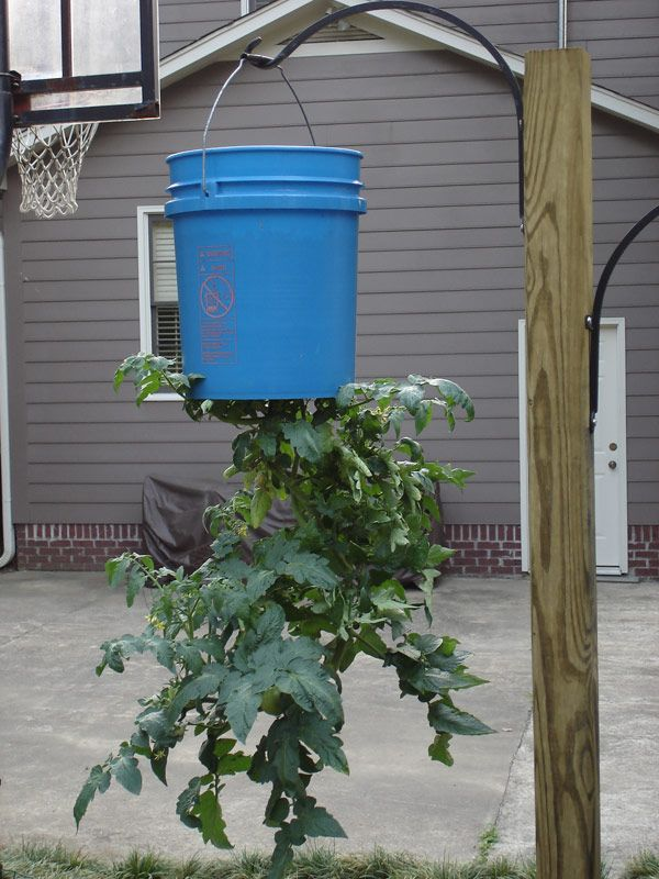 Plant Upside Down You Ve Seen Those Tomato Planters On Tv That Grow Tomatoes Upside Down But
