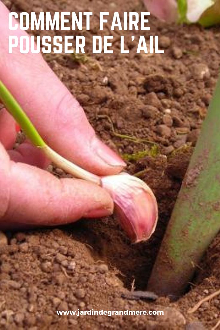 Faire Pousser Des Oignons En Pot comment faire pousser de l'ail in 2020