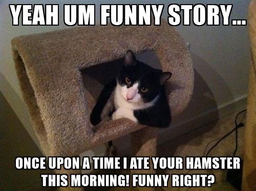 Funny Memes For Kids Animals : 70 funny pictures for today #78 funny pictures memes and funny