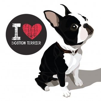 Download I Love Boston Terrier ในปี 2020