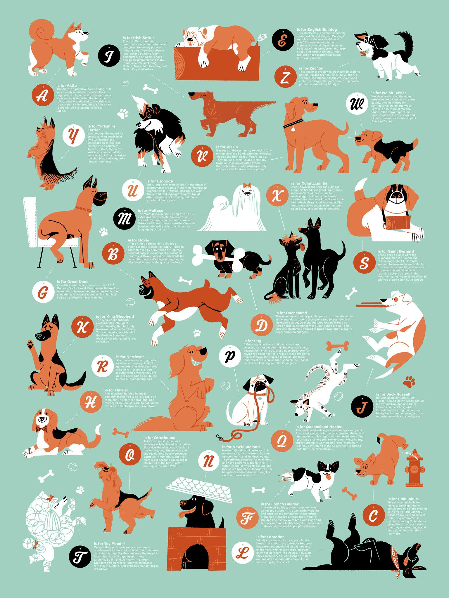 Dogs Alphabet Dog Poster Dogs World S Tallest Dog