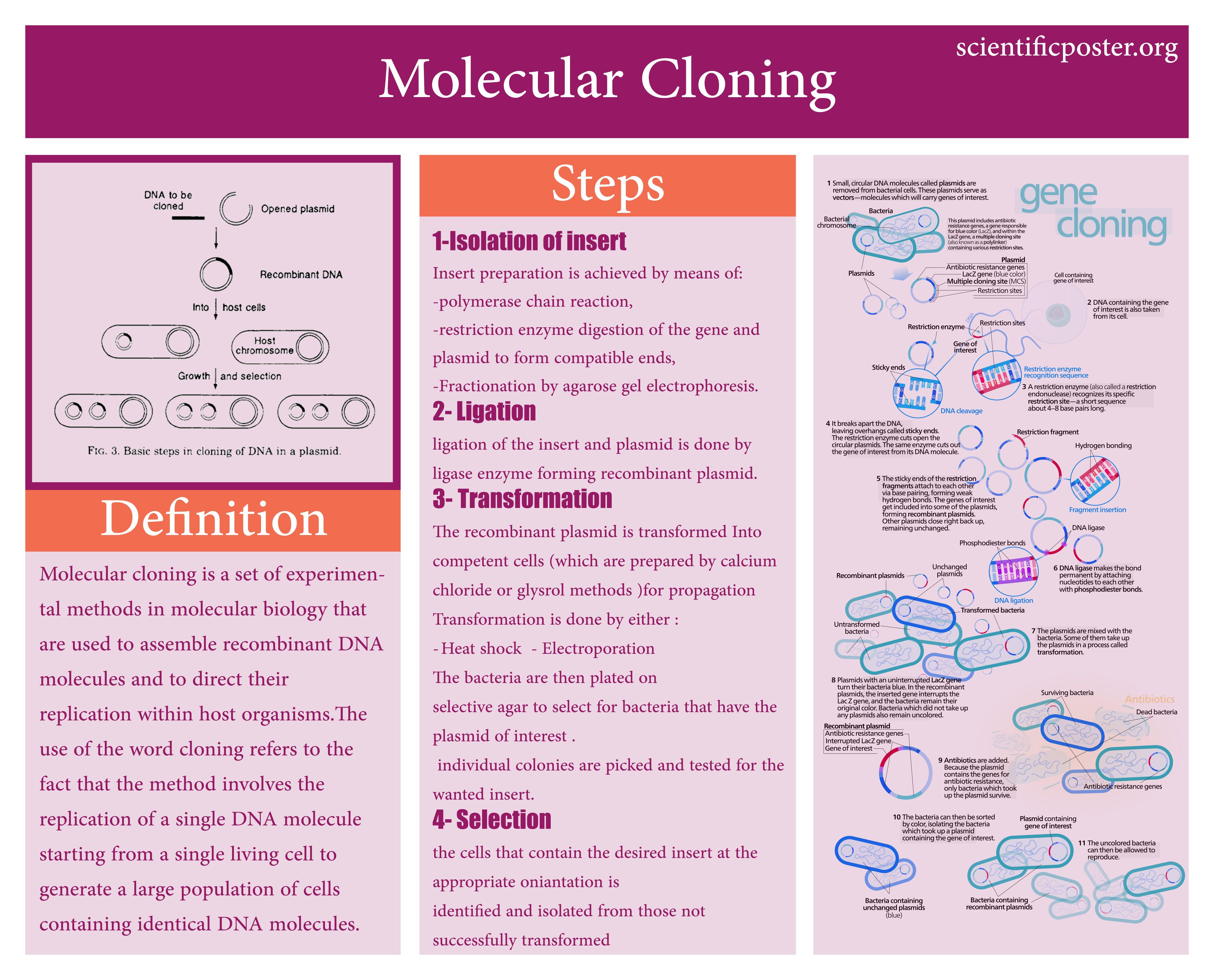Scientific Poster Sample | Scientific Posters Samples | Pinterest ...