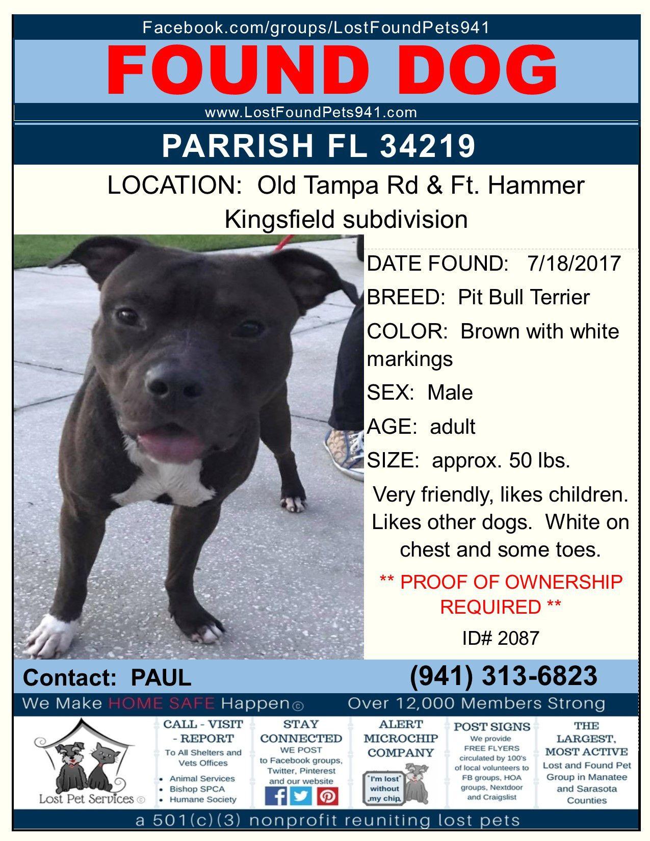 Do You Know Me Found Dog Pitbull Mix Parrish Fl 34219