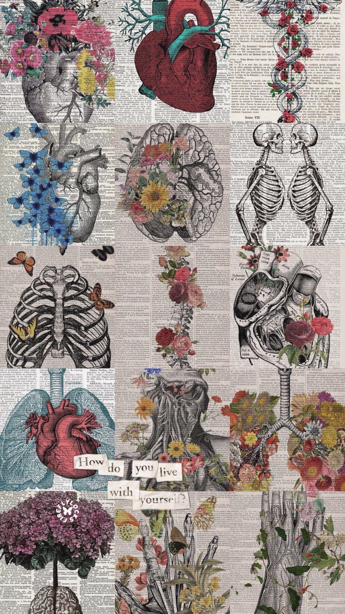 Human Body Art Wallpaper Anatomy Art Aesthetic Iphone Wallpaper