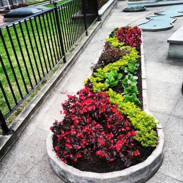 Begonia y duranta.   Diseño de jardín, Disenos de unas, Duranta