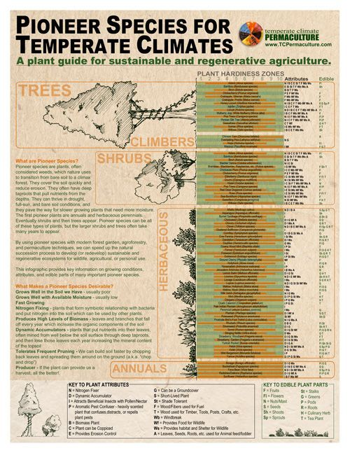 Infographic - Pioneer Species for a Temperate Climate free ...