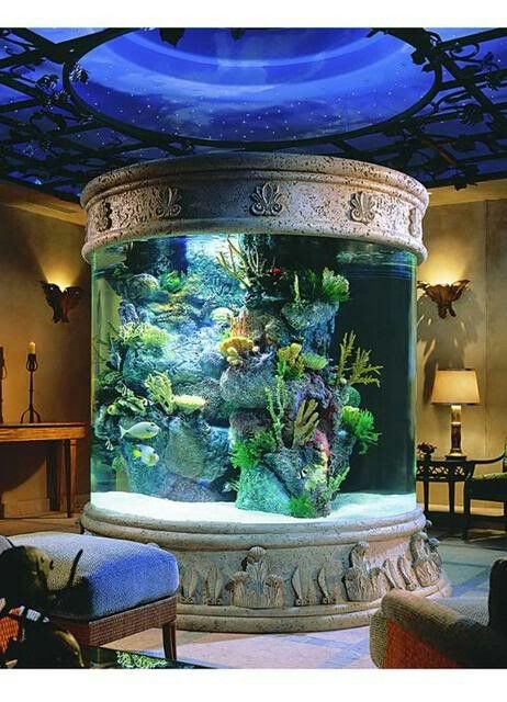 a huge fish tank definitely adding this to the list of thingsi need rh pinterest com