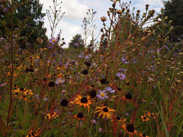 pflegeleichte Staudenwiese New Gardens Pinterest Garten - pflegeleichter garten modern