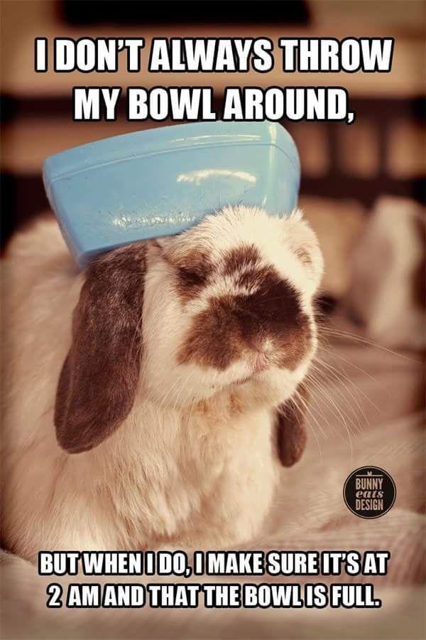 Good Morning Every Bun Who Was Kept Up Last Night By Their Bun Funny Rabbit Pet Bunny Funny Bunnies