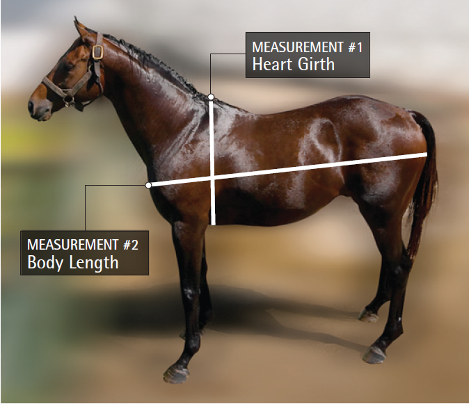 Knowing your horse's approximate weight is important for a ...