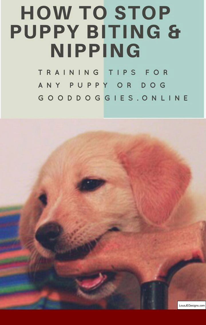 How To Train A Dog Not To Jump Up On You And Pics Of How To Train