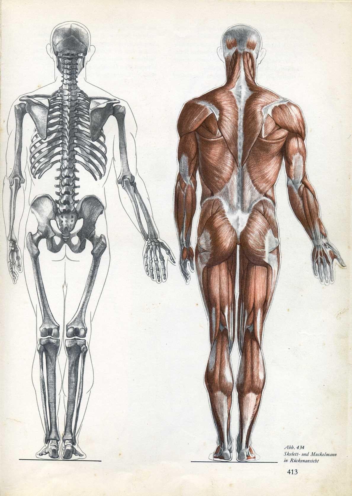 Pin von Henry Bridges auf Anatomy | Pinterest