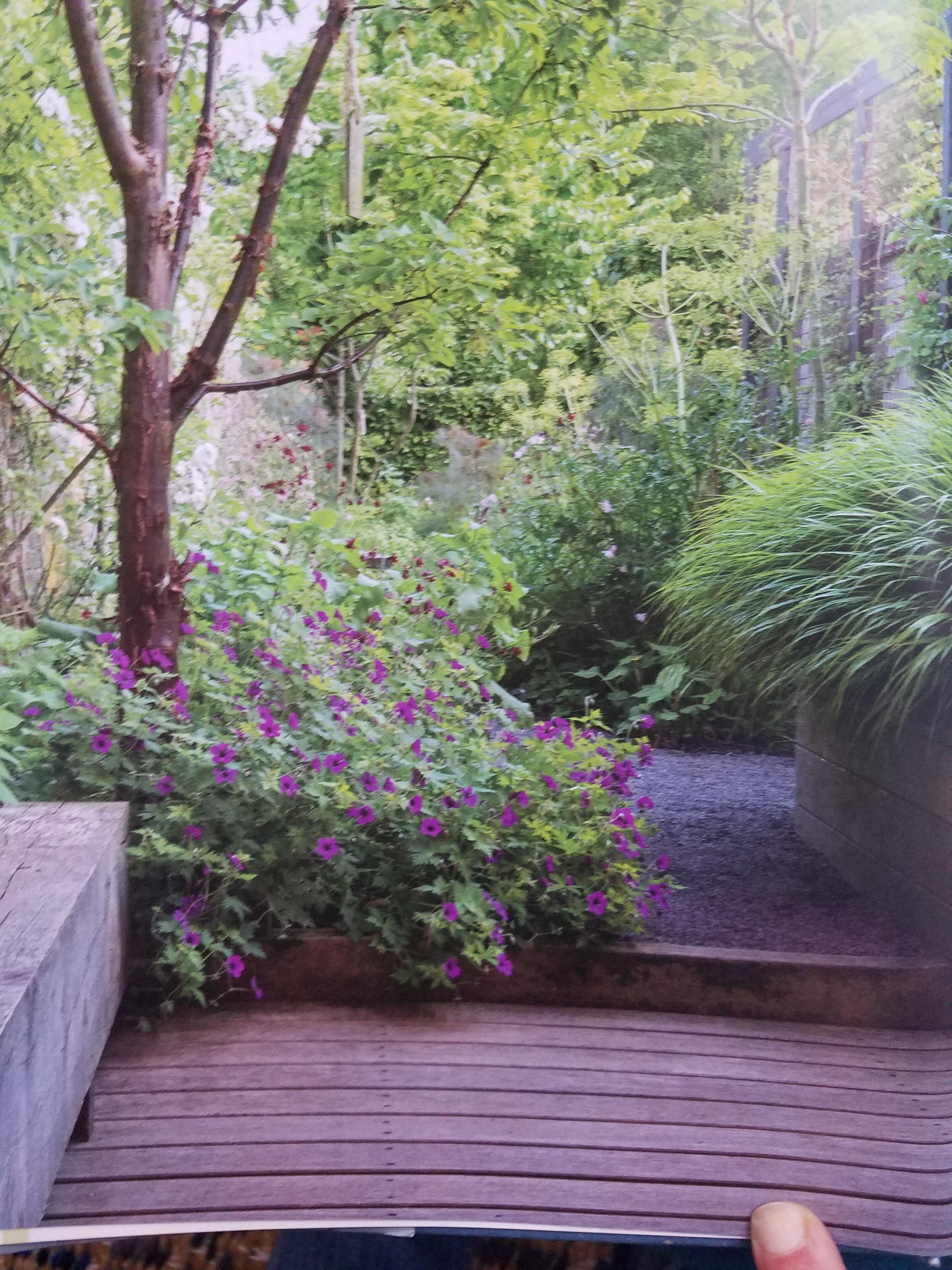 From Noel Kingsbury S New Small Garden With Photos By Maayke De Ridder Small Garden Garden Landscape