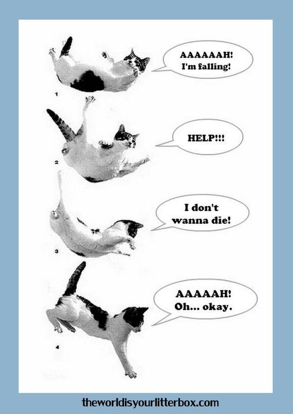 Falling Steve fisher, Litter box, Cute cats