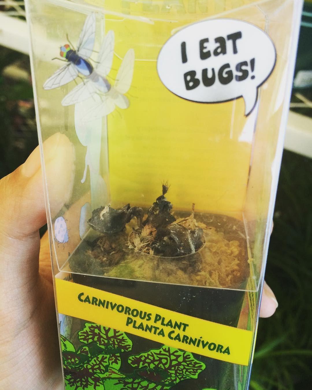 Poor venus flytrap at lowes #carnivorousplant #dead #lowes #venusflytrap #deadplant by dive_into_nature