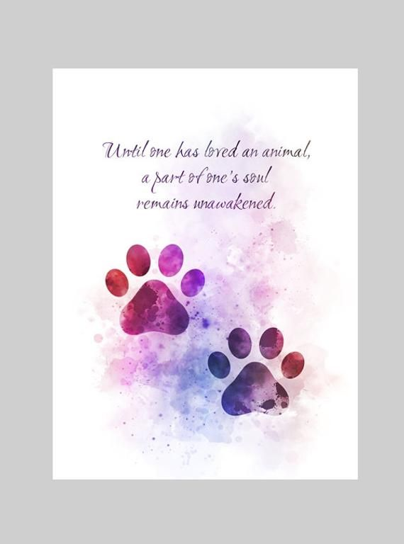Paw Prints Animal Quote'Until one has loved an animal, a part of one's soul remains unawakened.'PURCHASE MULTIPLE PRINTS AND ONLY PAY ONE COMBINED SHIPPING FEEUnique handmade Art Print created with mixed mediaand a contemporary design.Our high quality vivid images are Printed on280gsm Professional Photographic Glossy Paper.Hand Signed and dated on the back.Packaged flat and securely to ensure safe delivery.