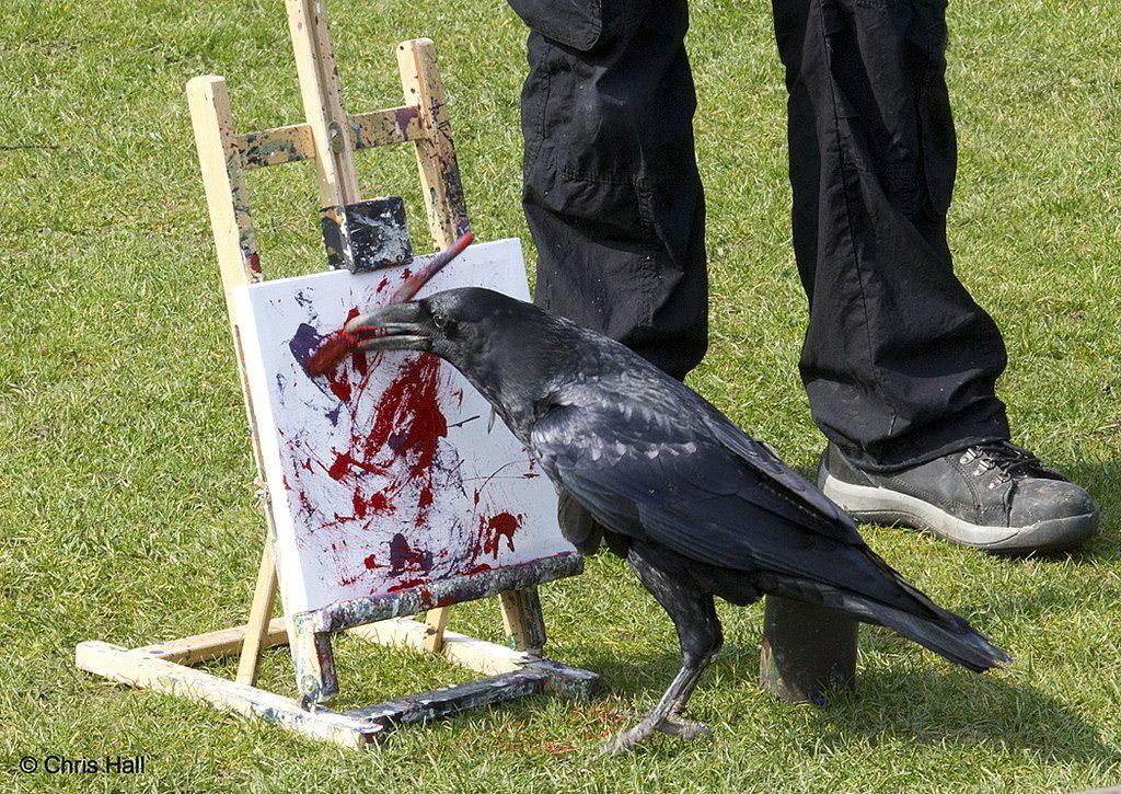 Нарциссом, черный ворон прикольные картинки
