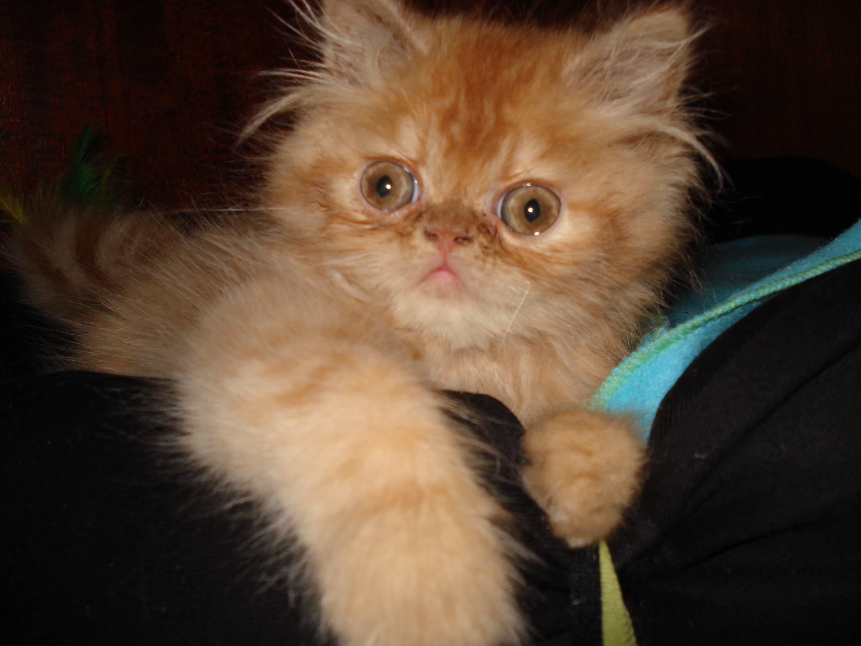Schumy Nene Lindo Demais Cats Animals Good Vibes