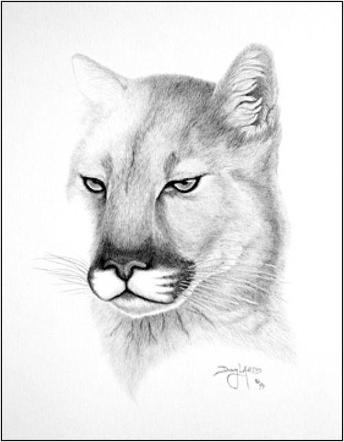 Maravilloso Animales Salvajes Dibujos Dibujos A Lapiz