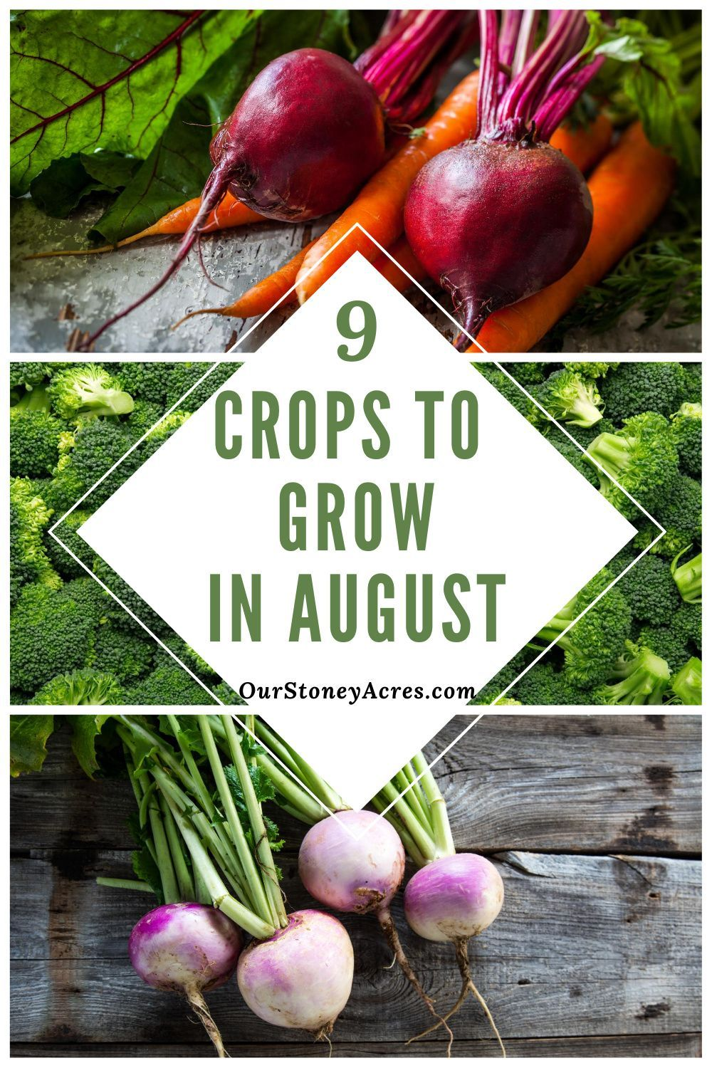 9 Crops You Can Plant In August For Fall And Winter Harvest Our Stoney Acres Fall Garden Vegetables Food Garden When To Plant Vegetables