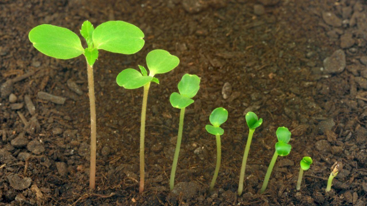 مراحل إنبات البذرة Plants Seedlings Seeds Color
