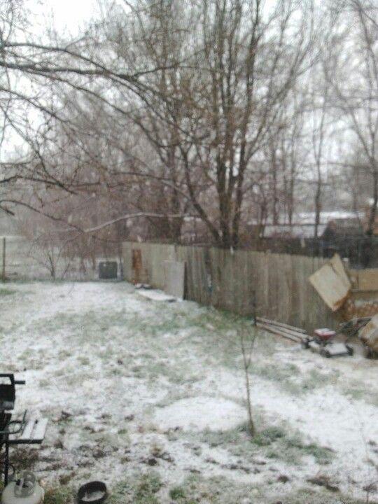 Snow in Wichita 3/23/13 - my son's backyard!!!