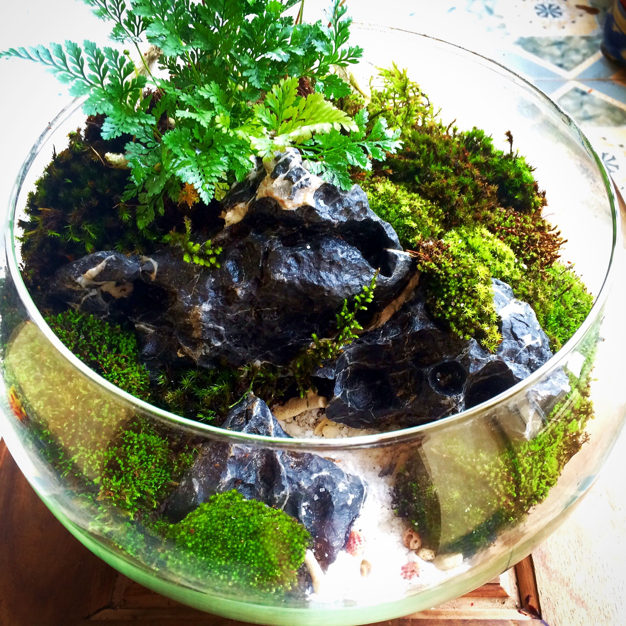 Terrariummoss minihaver pinterest terraria gardens and plants
