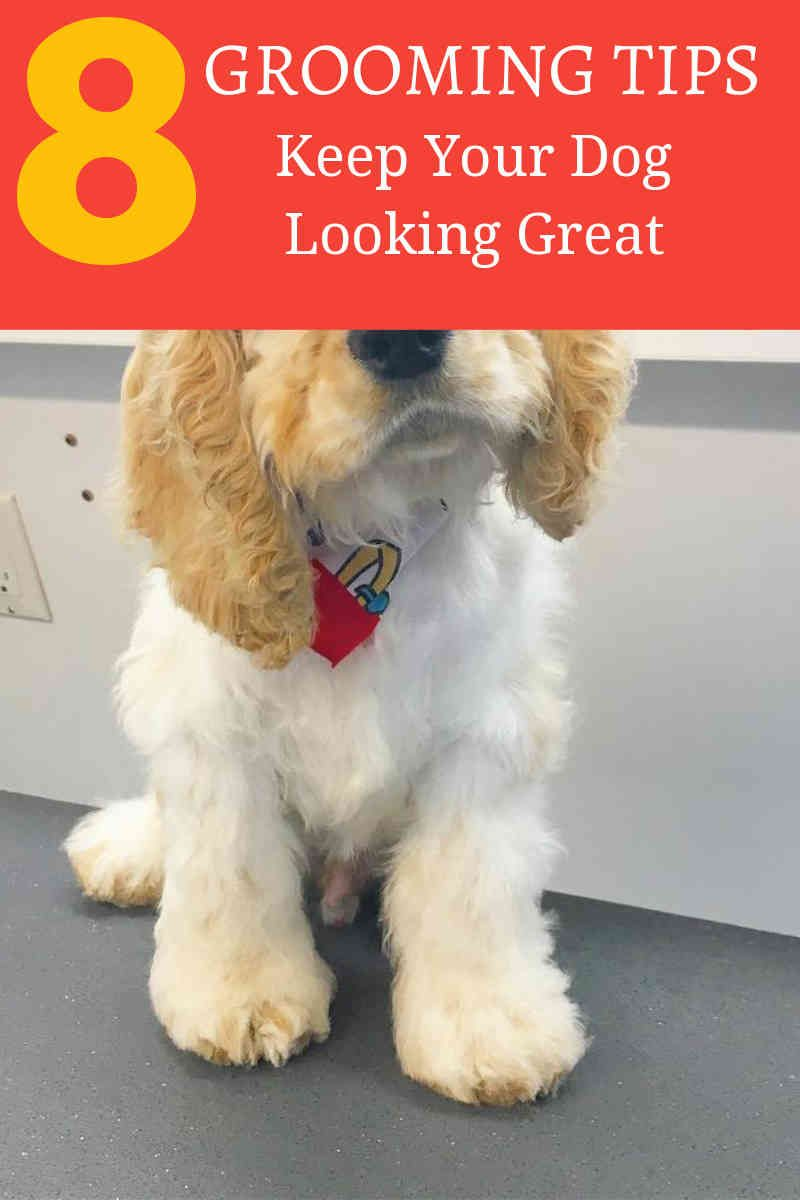 Pet Grooming Can Be An Activity That Most Vets And Breeders
