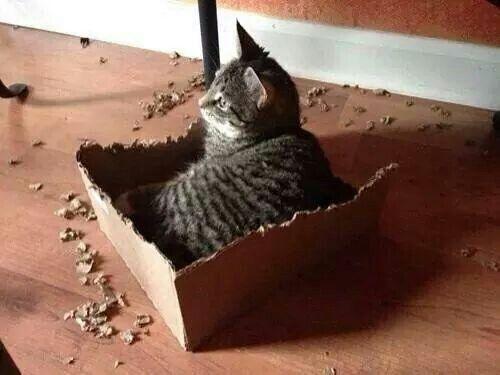Volevi una scatolina? Ecco fatto