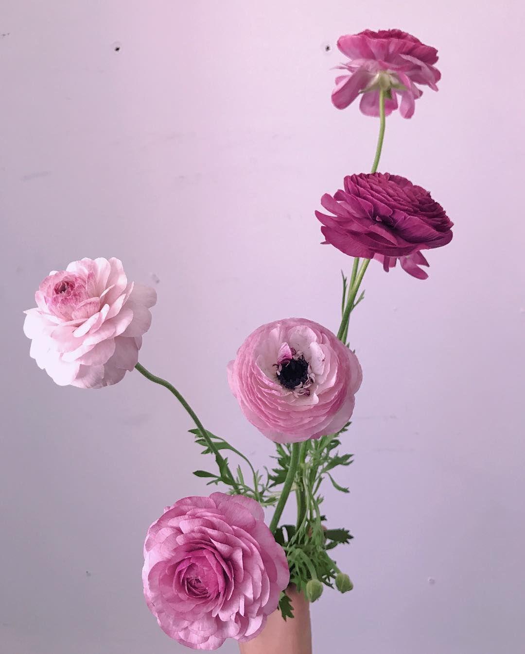 Ranunculus Ranunculus Flowers Peonies