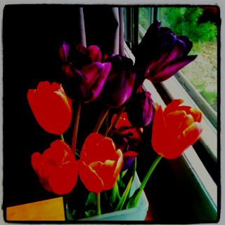 I adore tulips, purple and orange go well together.
