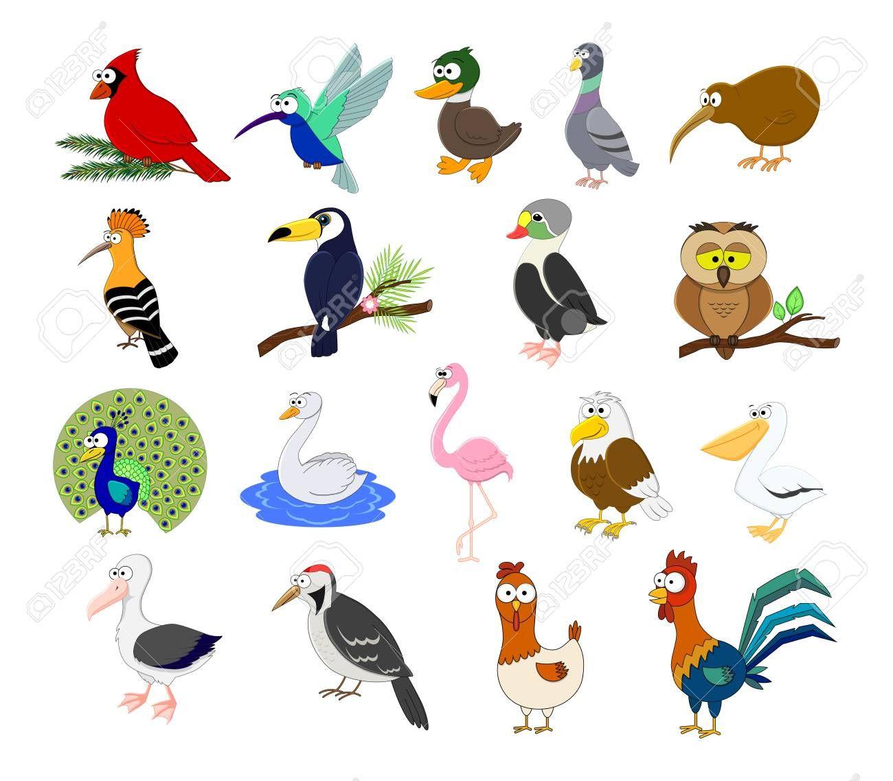 Big Set Of Different Cartoon Birds Vector Illustration